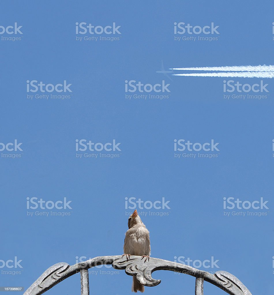 sparrow and jet royalty-free stock photo