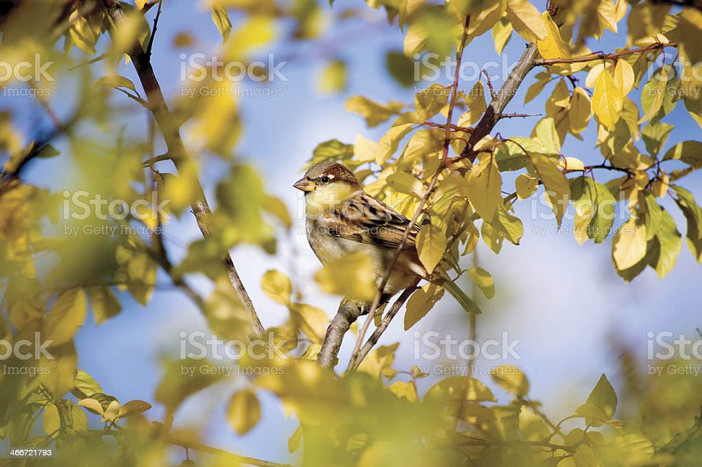 Sparrow Bird Hideout In Autumnal Trees stock photo
