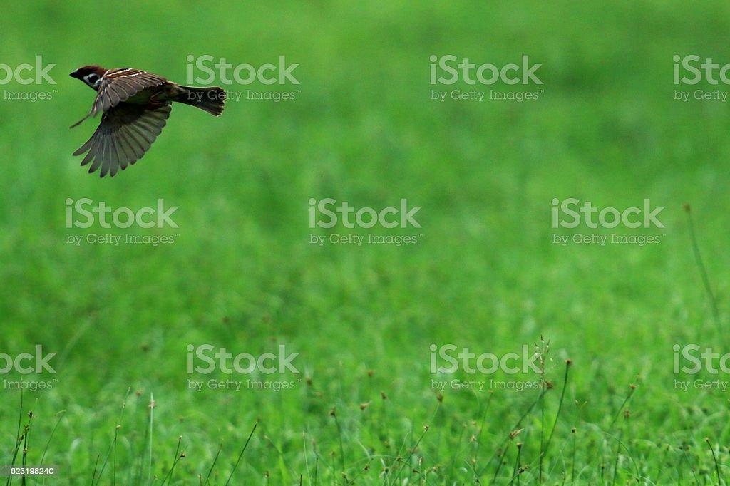 Sparrow bird stock photo