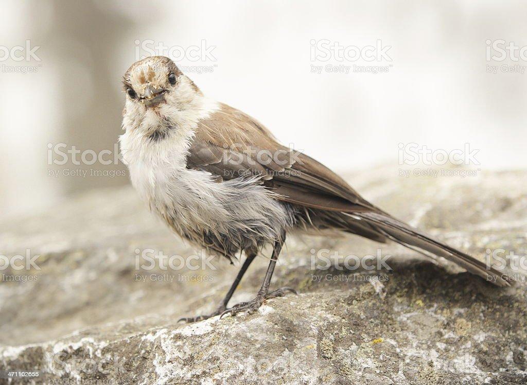 Sparrow Bird Western Passeridae Eating stock photo