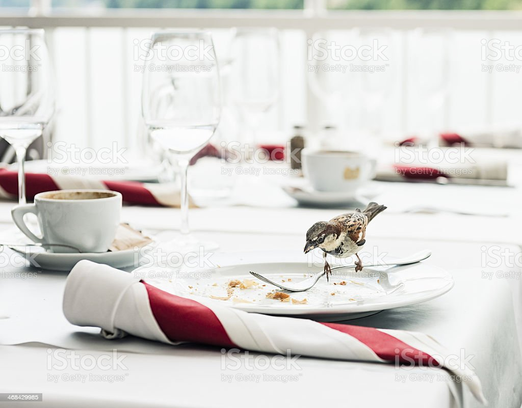 Sparrow Diner - Scavenging from Restaurant Table royalty-free stock photo