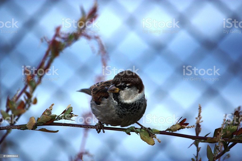 sparrow in fall stock photo