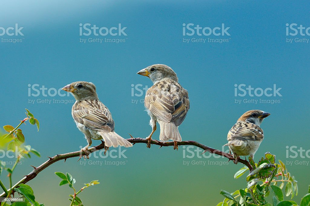 sparrow in natural habitat stock photo
