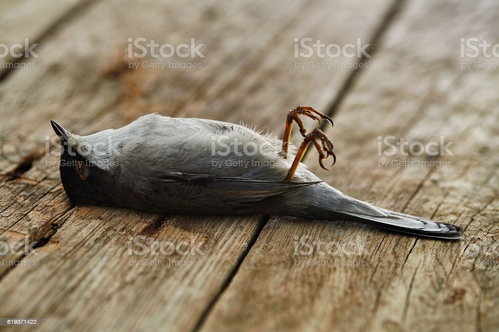 Sparrow lies dead on a wooden surface stock photo