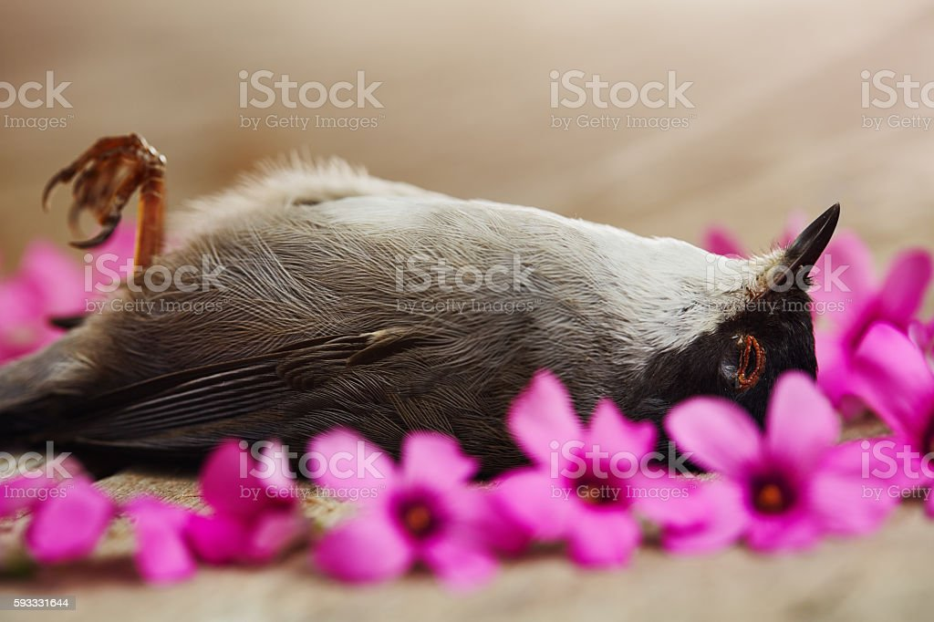 Sparrow lies dead on a wooden surface surrounded by flowers stock photo
