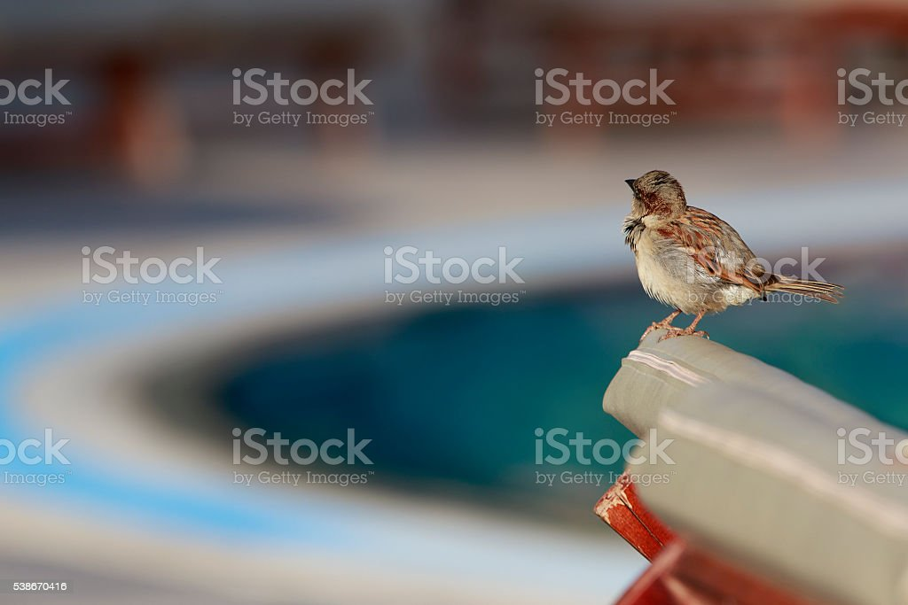 Sparrow On A Chair stock photo
