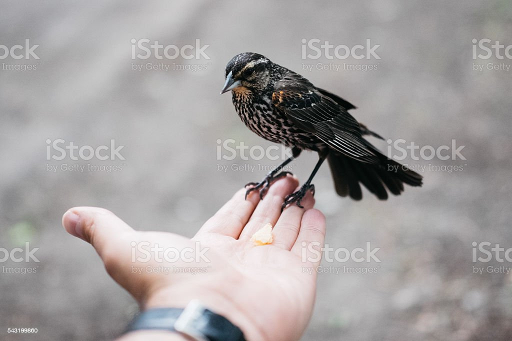 Sparrow on a man's hand stock photo