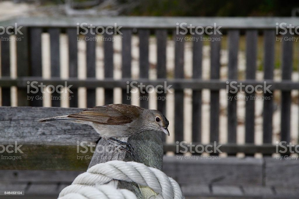 Sparrow on Fence Close-Up stock photo