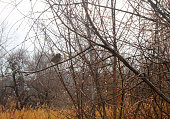 Sparrow on the bush