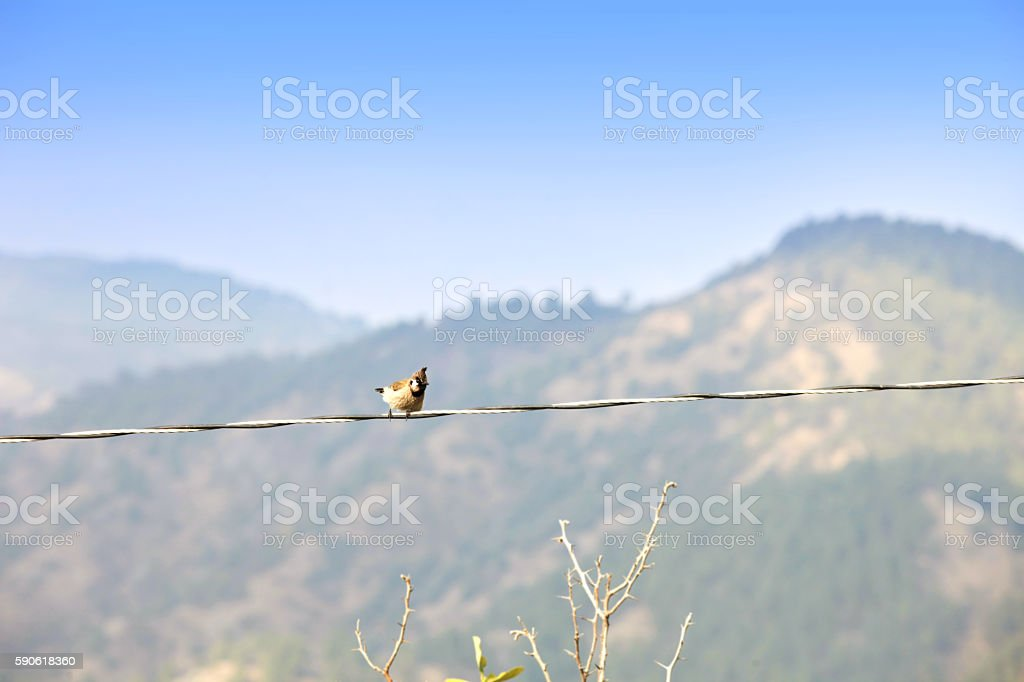 Sparrow sitting on electric wire stock photo