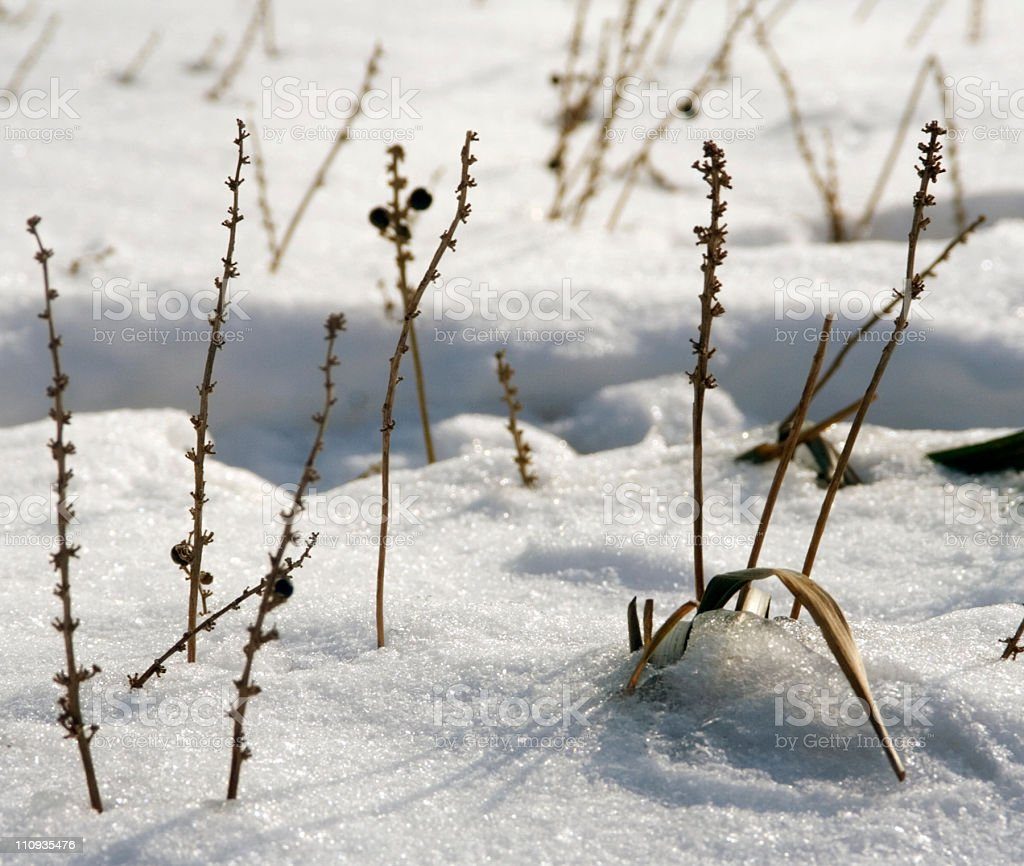 Sparse Winter Plants stock photo
