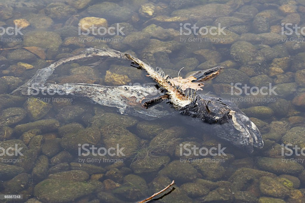 Spawned to Death royalty-free stock photo