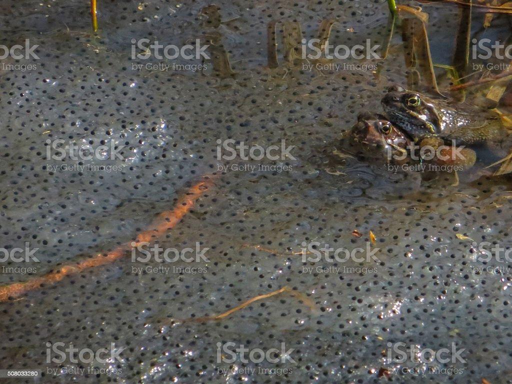 Spawning stock photo