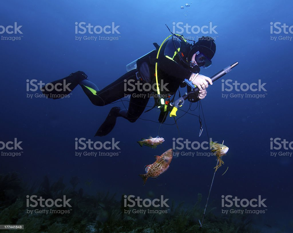Spear fisherman with speargun stock photo