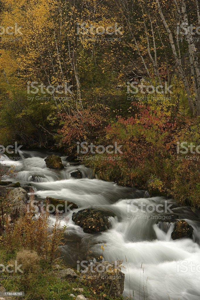 Spearfish Creek royalty-free stock photo