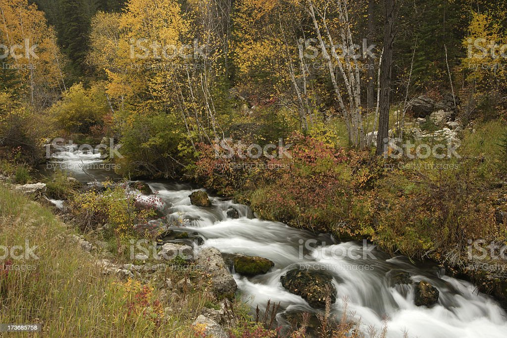Spearfish Creek royalty-free stock photo