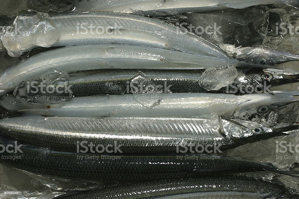 Spearfishes royalty-free stock photo