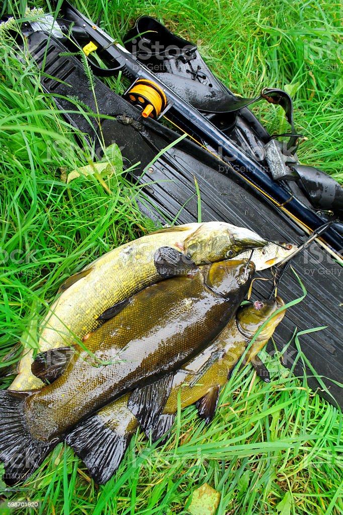 Spearfishing. Equipment for spearfishing and fish stock photo