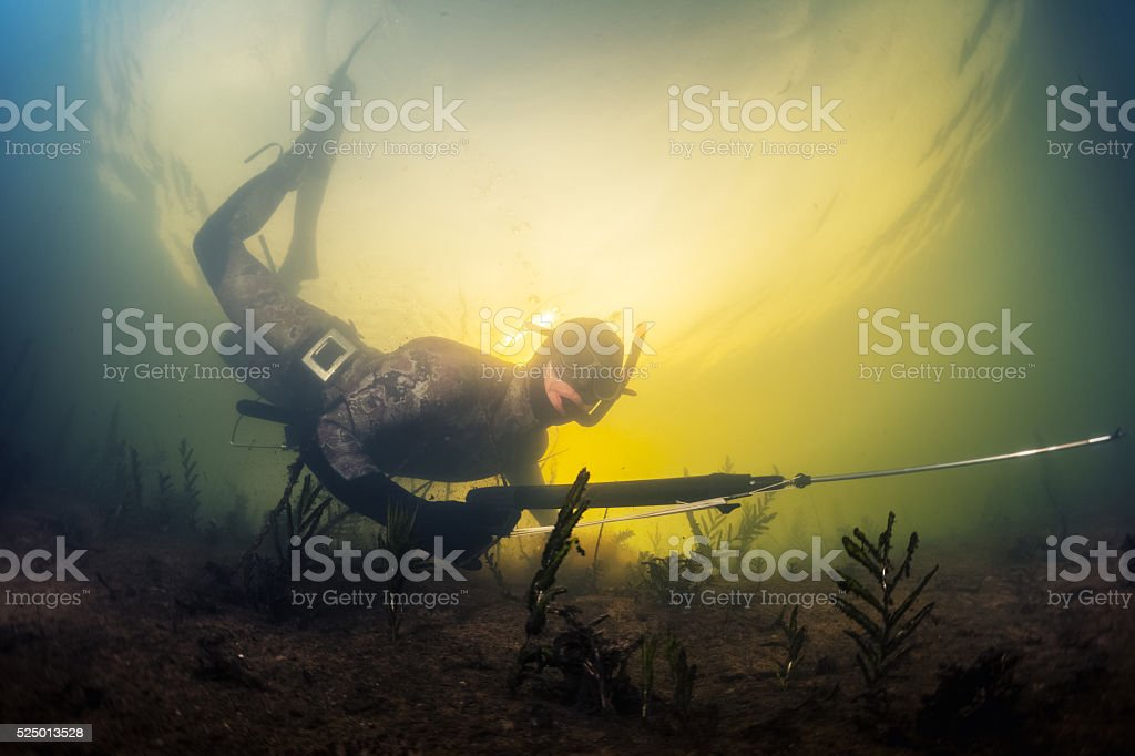 Spearfishing stock photo