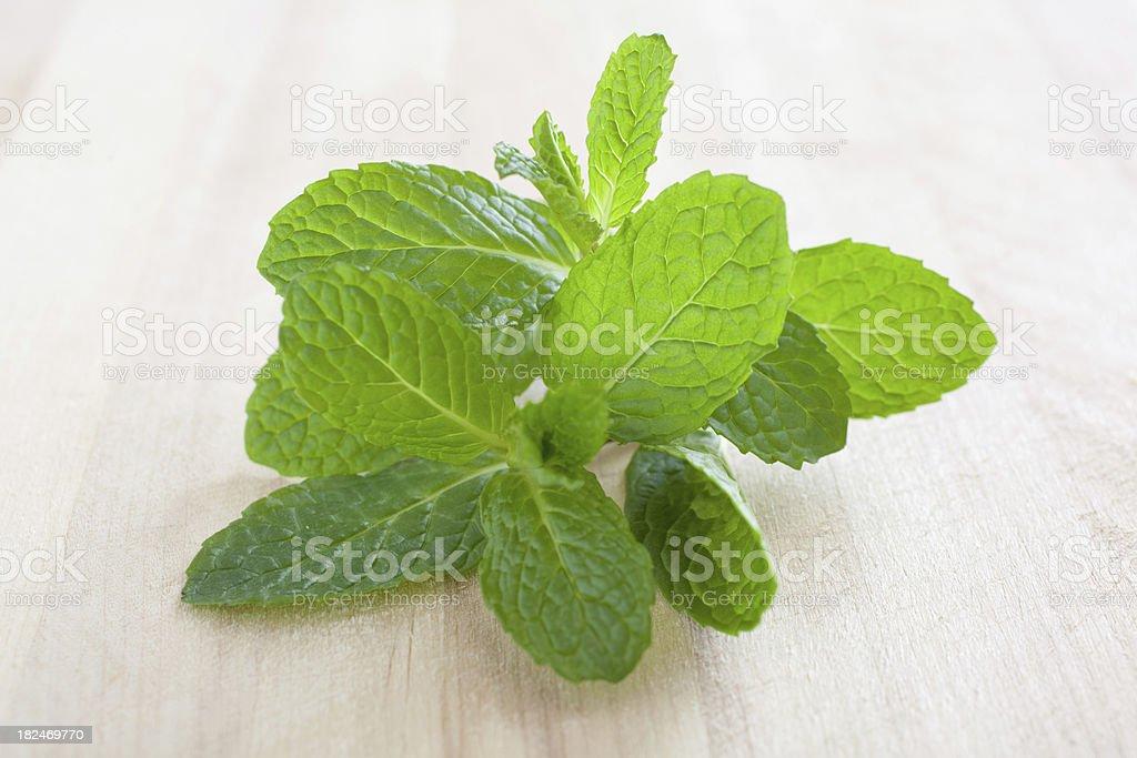 Spearmint Mint Herb stock photo