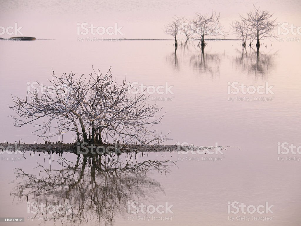 Special Landscape of Water & Tree, Tainan, Taiwan royalty-free stock photo