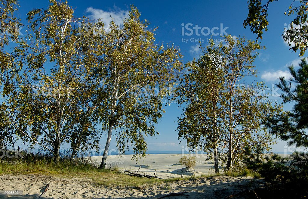 special trees for stoped running dunes royalty-free stock photo
