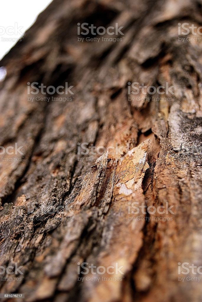Speckled Bark royalty-free stock photo