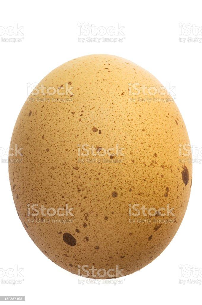 Speckled hens egg stock photo