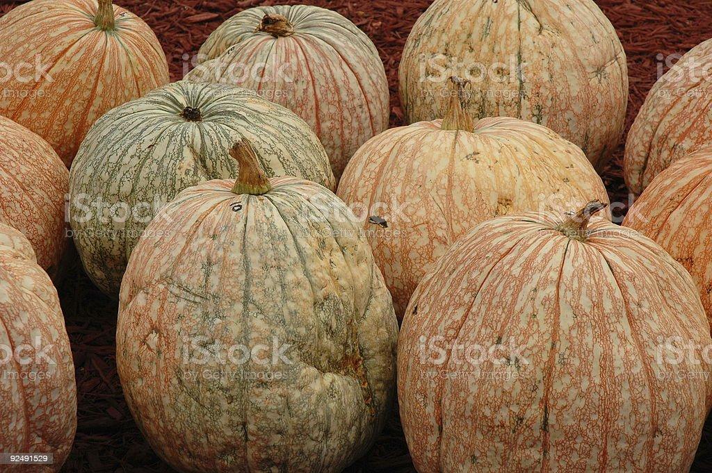Speckled Pumpkins stock photo