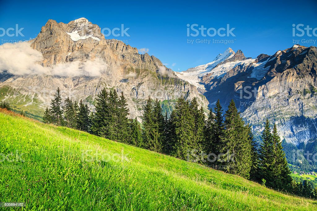 Spectacular green field with high snowy mountains, Grindelwald, Switzerland stock photo