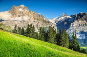 Spectacular green field with high snowy mountains, Grindelwald, Switzerland