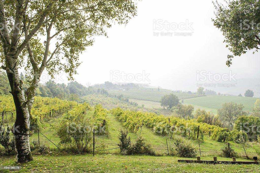 Spectacular wineyard in Italy stock photo