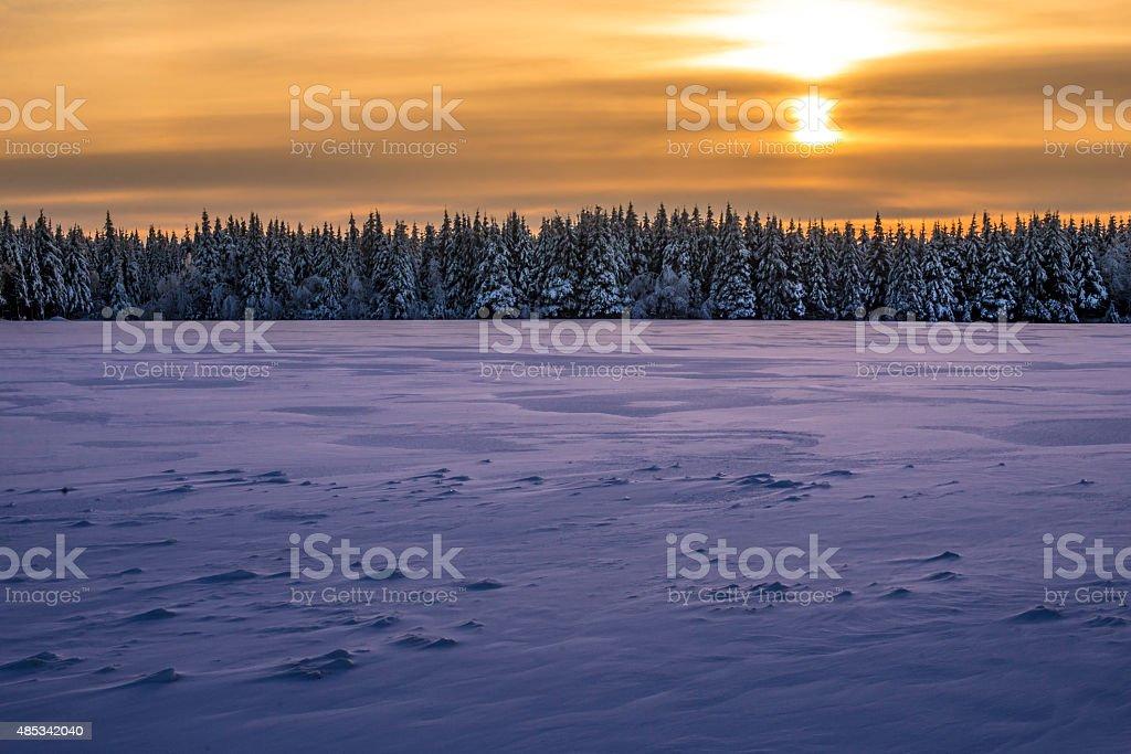 Spectacular winter sunset over an horizon of firs stock photo