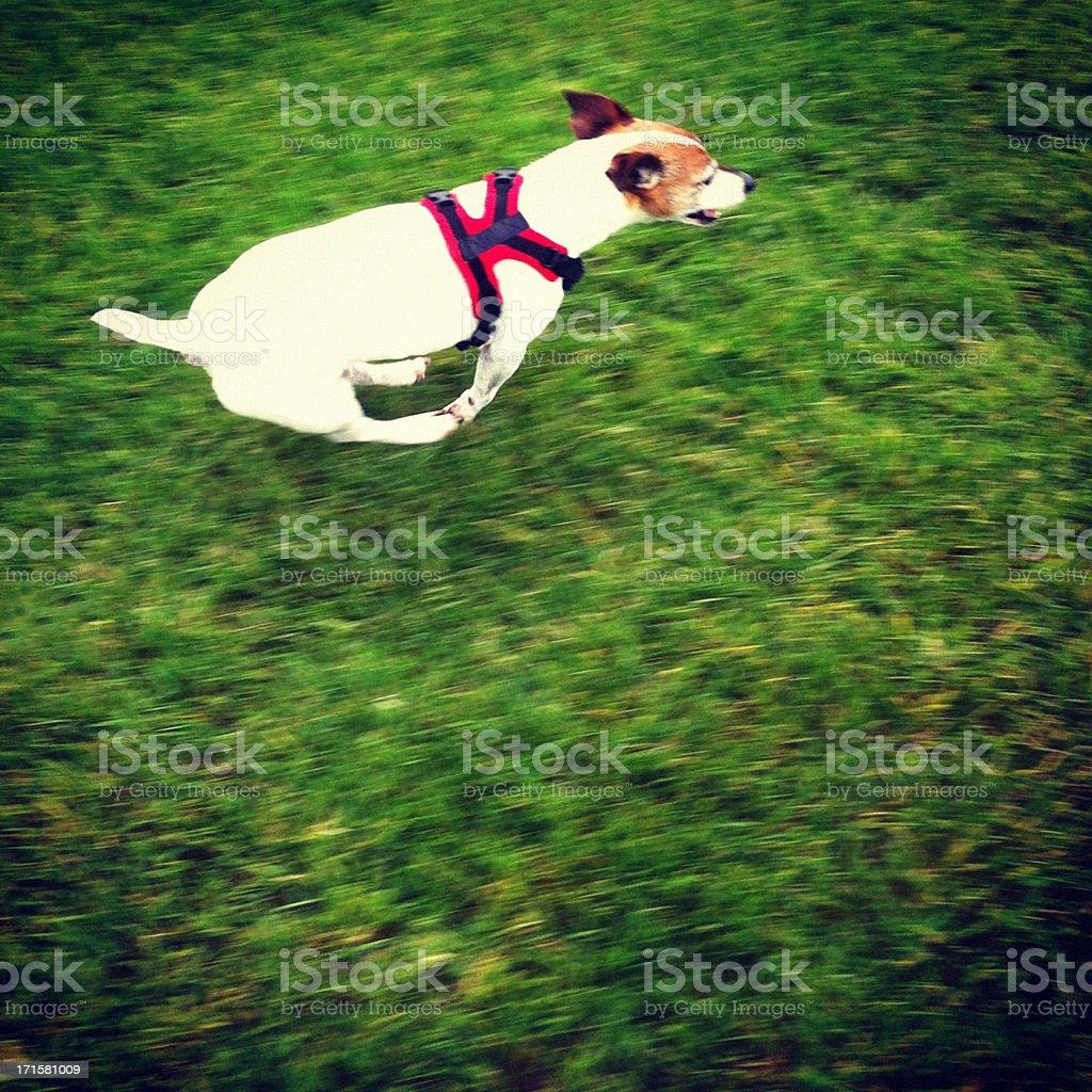 Speedy Dog stock photo