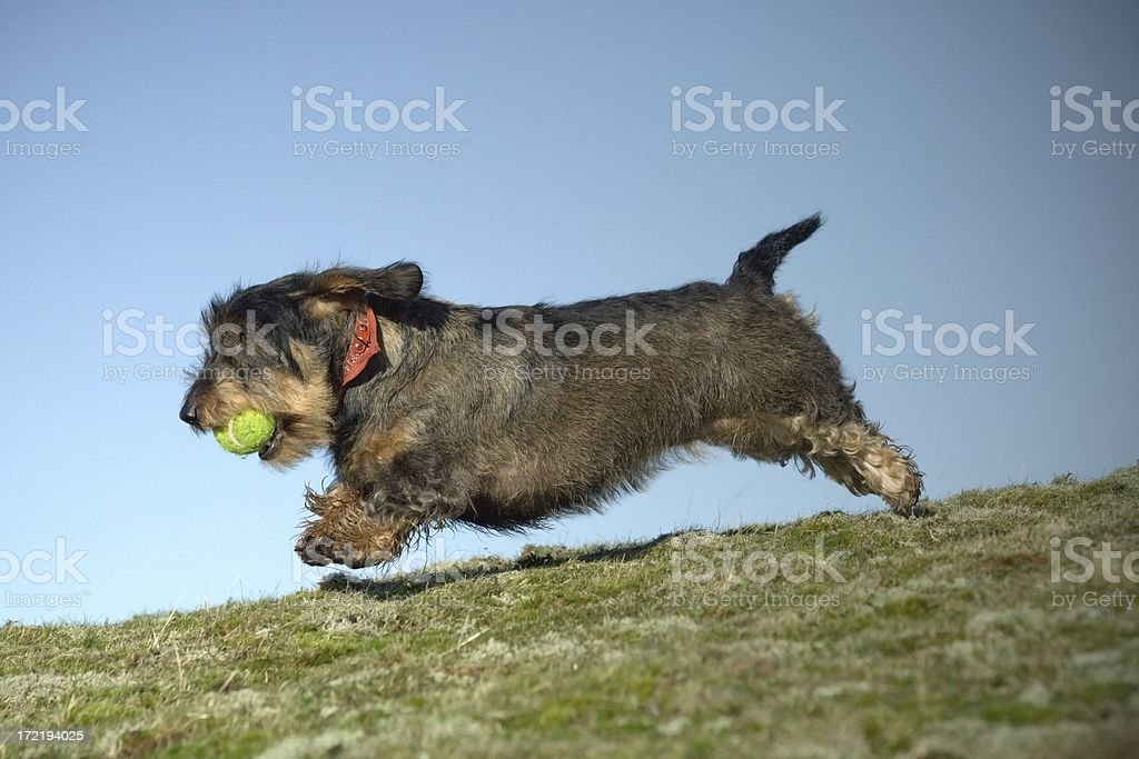 speedy stock photo