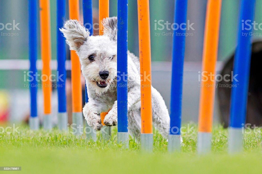 Speedy stock photo