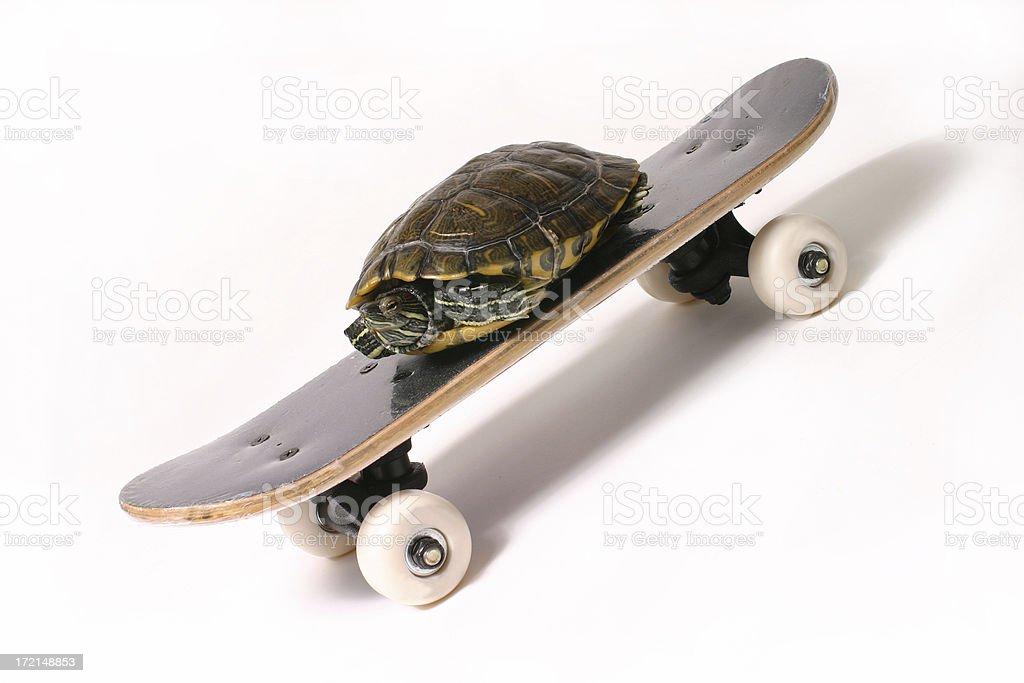 Speedy Turtle royalty-free stock photo