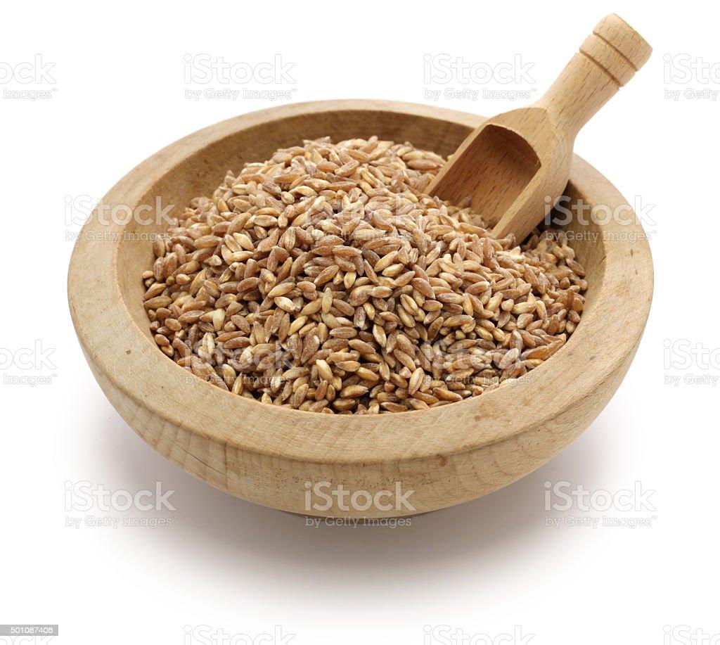 spelt, farro, primitive wheat stock photo