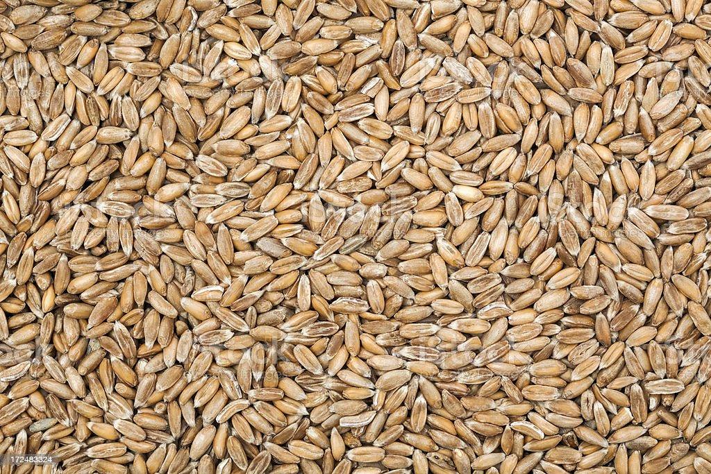 Spelt wheat royalty-free stock photo
