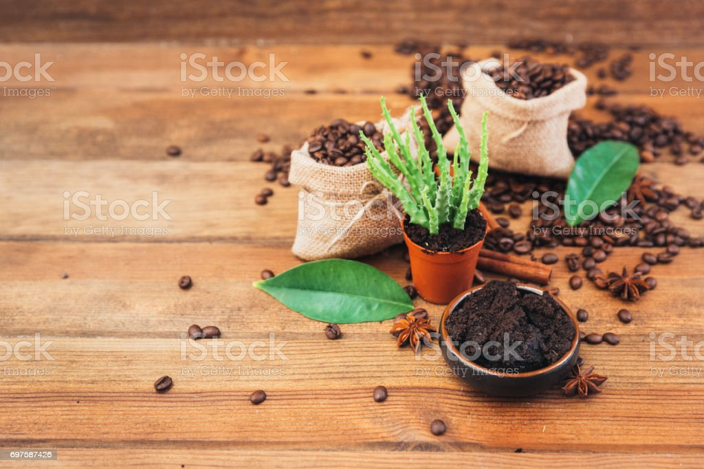 Spent grounded coffee and plant as natural fertilizer over wooden background stock photo