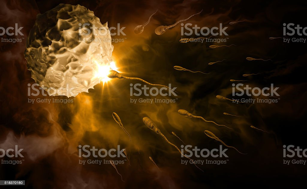 Sperm and Egg stock photo