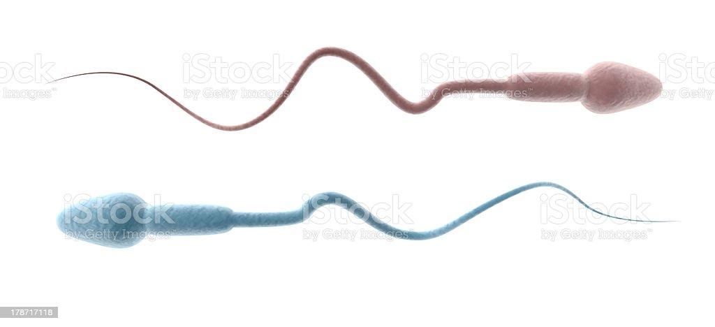 Гамасяк с спермой картинки фото 724-552