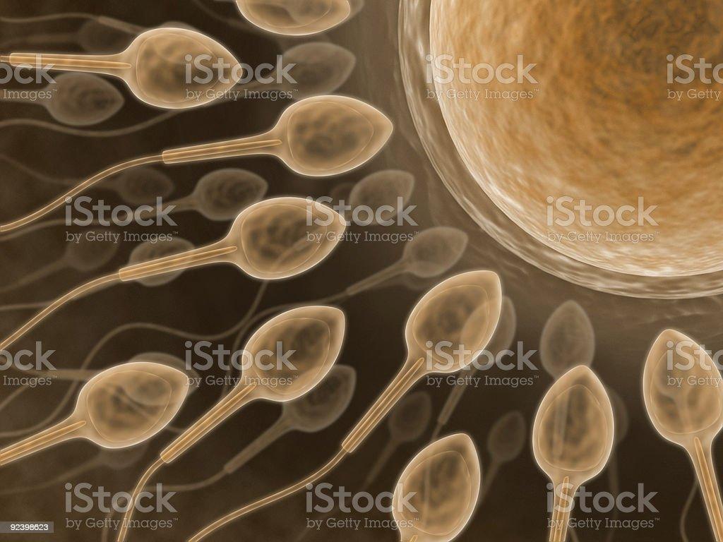 Sperm (Close up) stock photo