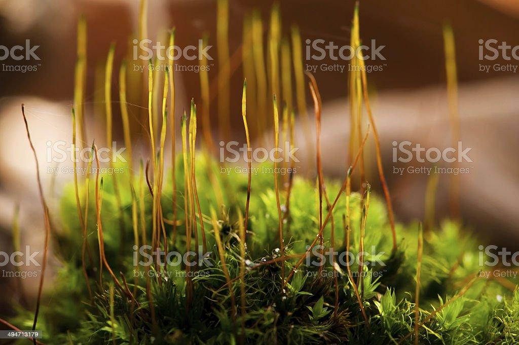 Sphagnum cover stock photo