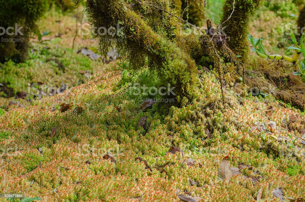 Sphagnum moss in the national park. stock photo