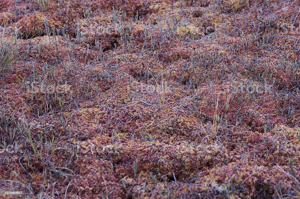 Sphagnum moss pattern stock photo