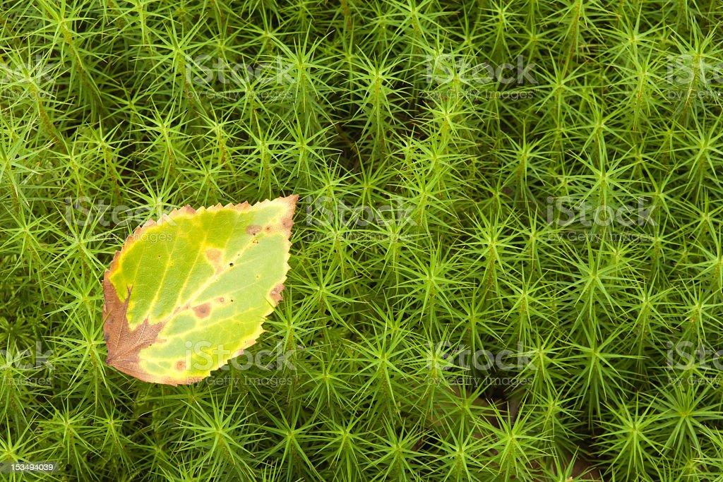 Sphagnum moss stock photo