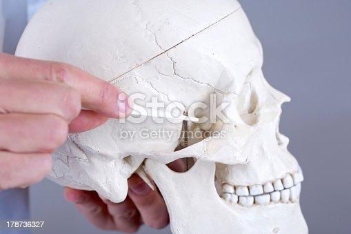 kość klinowa zdjęcia stockowe 178736327 | istock, Sphenoid