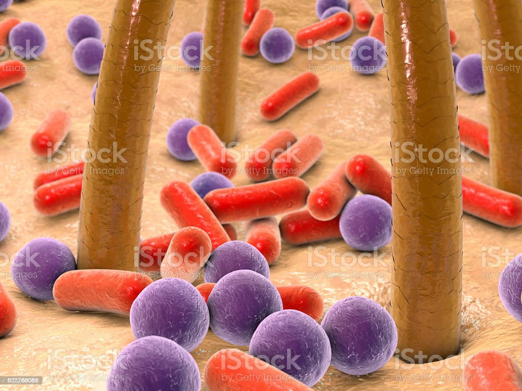 Spherical and rod-shaped bacteria on skin with hairs stock photo