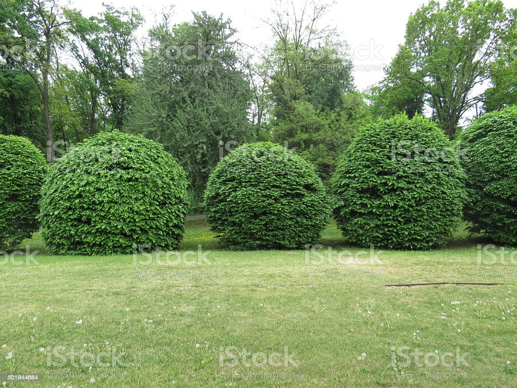spherical bushes stock photo